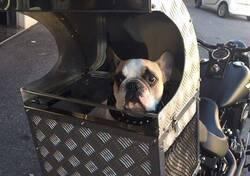 Harley-Davidson® DOG BOX , Trasportino x cane