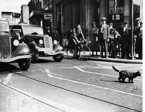 Gatto attraversa strada e auto si ribalta: al volante una suora (2)