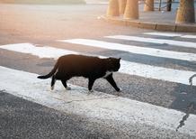 Gatto attraversa strada e auto si ribalta: al volante una suora