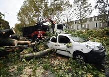 Albero caduto, auto danneggiata: come chiedere il risarcimento