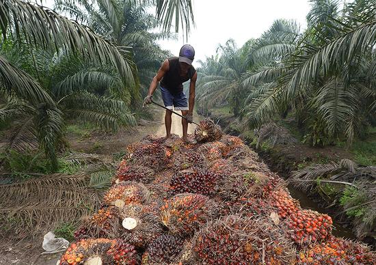 UE: via l'olio di palma dal biodiesel