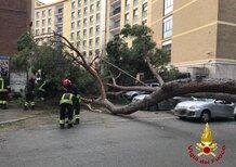 Roma, cade pino secolare. Due feriti gravi