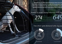 Il cane libero in auto aumenta lo stress ed il rischio incidenti